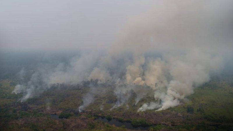 Tanpa Air, Begini Cara Australia Mengatasi Kebakaran Hutan