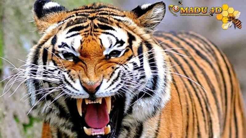 Legenda Klasik Harimau di Minangkabau